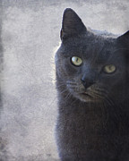 Homeless Pets Art - One Of Those Mysterious Blue Days by Kathy Clark