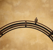 Textured Background Prints - One pigeon perched on a metallic arch. Print by Bernard Jaubert