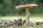 Wild Mushroom Prints - One Rainy Day Print by Tim Gainey