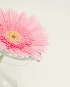 Flowers Gerbera Prints - One Single Drop Print by Kay Pickens