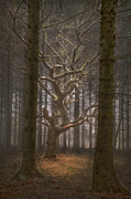 One Tree Print by Curtis Radclyffe