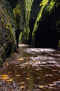 Creeks Prints - Onieata Gorge Print by Jeff  Swan