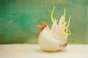 Sprouted Posters - Onion Bird Poster by Kay Pickens