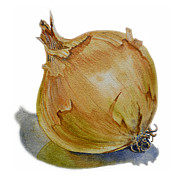Kitchen Watercolor Paintings - Onion by Irina Sztukowski