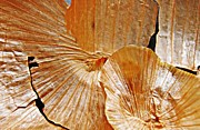 Onion Photos - Onion Skin Abstract by Sarah Loft