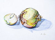 Food And Beverage Drawings - Onions by Aaron Spong