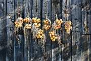 Barnboard Prints - Onions and Barnboard Print by Barbara McMahon