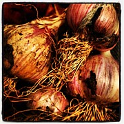 Onion Photos - Onions by Jeff Klingler