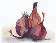 Onion Paintings - Onions by Sandy Linden