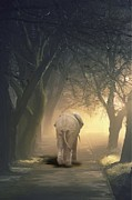 Elephant Digital Art Posters - Oniric Elephant Poster by Salvatore Cammarata