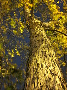 Guy Ricketts Photography Prints - Only God Can Make a Tree Print by Guy Ricketts