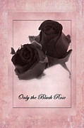 David Birchall - Only The Black Rose