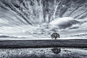 Oak Tree Photos - Open Arms by Greg Mitchell