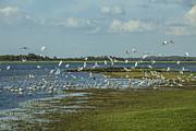 Patricia Hofmeester - Open bills near a lake