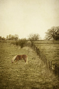 Grazing Horse Posters - Open Fields Poster by Margie Hurwich