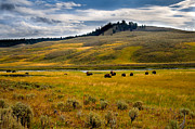 Idaho Scenery Posters - Open Range Poster by Robert Bales