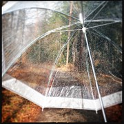 Trees Art - Open umbrella with water drops in the forest by Matthias Hauser