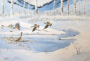 Snow Geese Mixed Media - Open Water by Richard Faulkner