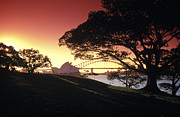 Sydney Harbour Prints - Opera Tree Print by Sean Davey