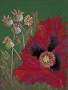 Flower Pastels Posters - Opium Poppy Barbaras Garden Poster by Jocelyn Paine