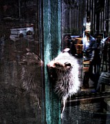 Lilliana Mendez - Opossum in the City