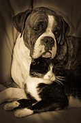 Boxer Dog Photos - Opposites Attract by DigiArt Diaries by Vicky Browning