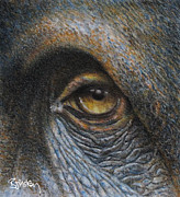 Orang Utan Drawings Posters - Orang-utan Poster by Barry Mckay