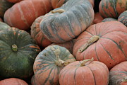 Sycamore Grove Park Prints - Orange and Green Pumpkins Print by Jean Marshall