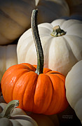 Orange Pumpkins Prints - Orange and White Pumpkins Print by Julie Palencia
