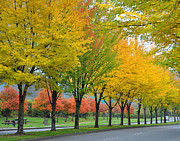Turning Leaves Prints - Orange and Yellow Boulevard Print by Kirt Tisdale