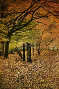Orange Autumn Print by David Tinsley