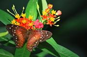 Amee Stadler - Orange Beauty