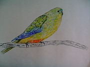Wings Artwork Mixed Media Prints - Orange-bellied parrot Print by Jan Rotz