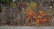 Orange Bike Print by Graham Foulkes