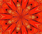 Barbara Drake - Orange Blossom Special