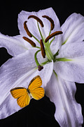 Garry Gay - Orange Butterfly On Lily