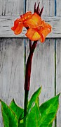 Canna Painting Framed Prints - Orange Canna Lily Framed Print by Melvin Turner