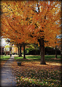 Nature Study Digital Art Posters - Orange Canopy - Davidson College Poster by Paulette Wright