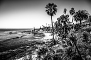 Laguna Beach Posters - Orange County California in Black and White Poster by Paul Velgos