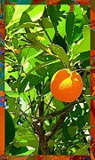 Orange Metal Prints - Orange Crush Metal Print by Mindy Newman