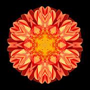 Orange Dahlia Flower Mandala Print by David J Bookbinder