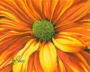 Daisy Drawings - Orange Daisy by Troy Argenbright