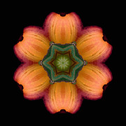 Orange Daylily Flower Mandala Print by David J Bookbinder