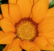 Lisa Bentley Art - Orange Delight by Lisa Bentley