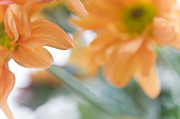 Floral Composition Photos - Orange Design. Paintrly Chrysanthemum  by Jenny Rainbow