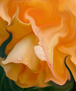 Begonias Posters - Orange Fantasy Begonia Flower Poster by Jennie Marie Schell