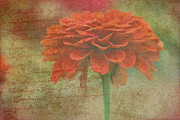 Orange Floral Fantasy Print by Kay Novy