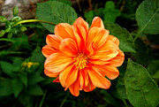 Jamie White - Orange Flower