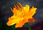 Orange Flower Print by Mary Machare