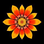 Orange Gazania I Flower Mandala Print by David J Bookbinder